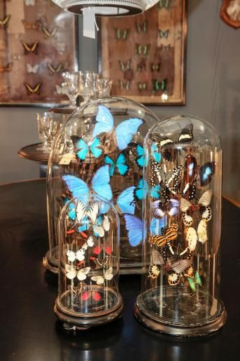 Butterfly domes from Alex MacArthur Interiors. (www.alexmacarthur.co.uk)