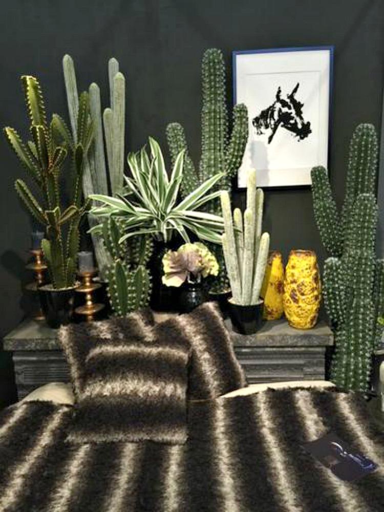 cactus-by-abigail-ahern